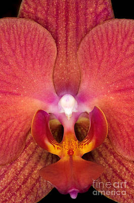 Orchid Up Close Poster by Terry Elniski