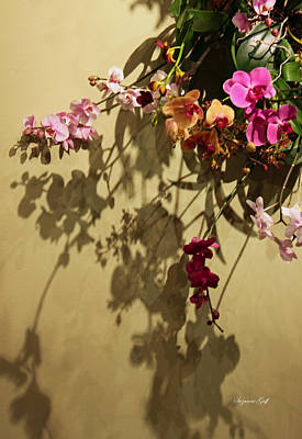 Orchid Wreath Abstract Poster