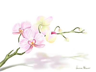 Orchidea Poster by Veronica Minozzi