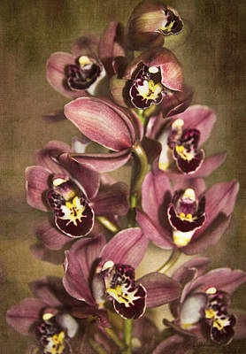 Poster featuring the photograph Orchids - Cymbidium  by Kerri Ligatich