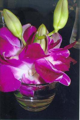 Orchids In A Glass Poster by Robert Bray