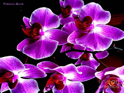 Orchids Of Praise Poster by Patricia Bunk