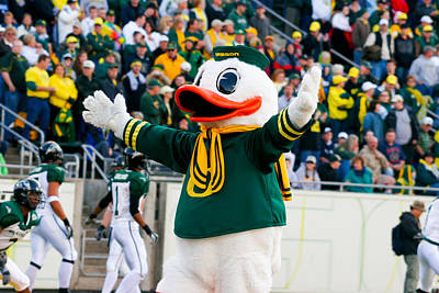 Oregon Ducks Mascot Puddles At Autzen Stadium Poster