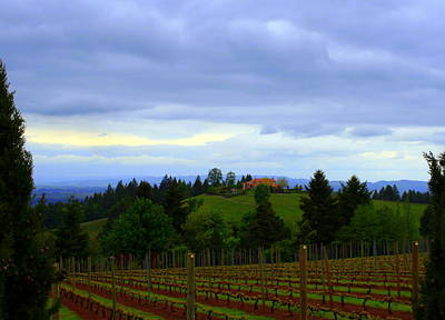 Poster featuring the photograph Oregon Wine Country by Debra Kaye McKrill