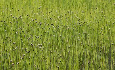 Organic Green Grass Backround Poster