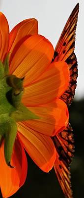 Organic Nectar Poster by Tara Miller