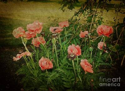 Oriental Poppies Poster by Rosemary Aubut