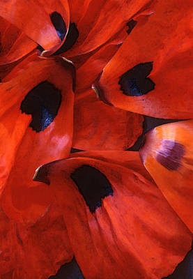 Oriental Poppy IIi Poster