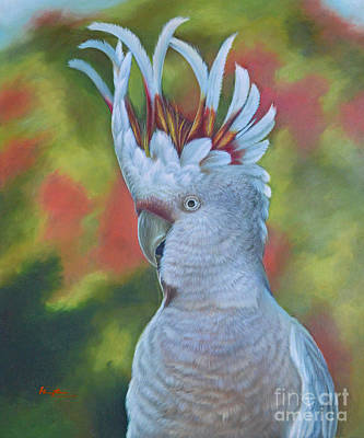 Original Animal Oil Painting Art -parrot #16-2-5-17 Poster