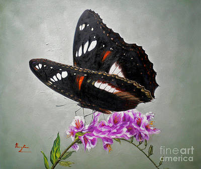 Original Animal Oil Painting Art-the Butterfly#16-2-1-09 Poster
