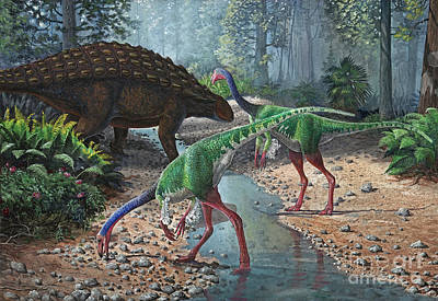 Ornithomimus Swallowing Stones Poster by Sergey Krasovskiy