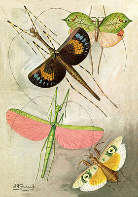 Orthoptera By F. W. Frohawk 1896 Poster by Robert Jensen