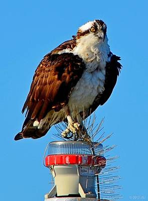Osprey Close-up On Water Navigation Aid Poster by Jeff at JSJ Photography