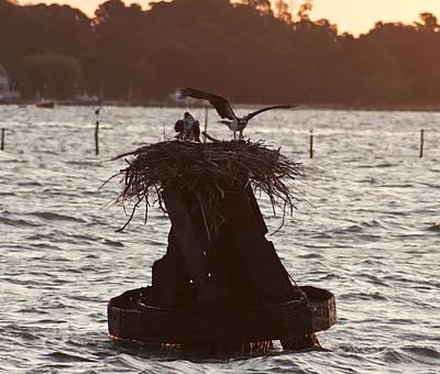 Osprey Nest - Piney Point Maryland Poster