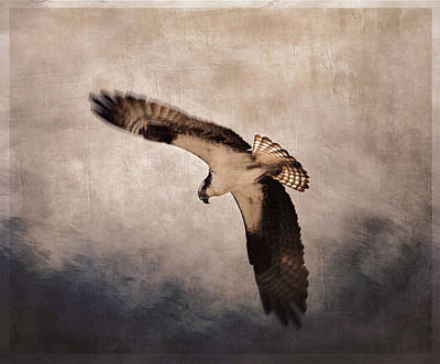 Osprey Over The Columbia River Poster by Carol Leigh
