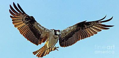 Osprey Talons First Poster