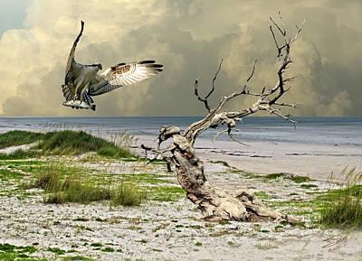 Osprey's Catch Poster