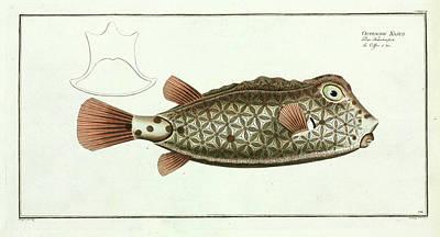 Ostracion Nasus (rhynchostracion Nasus) Poster by Natural History Museum, London