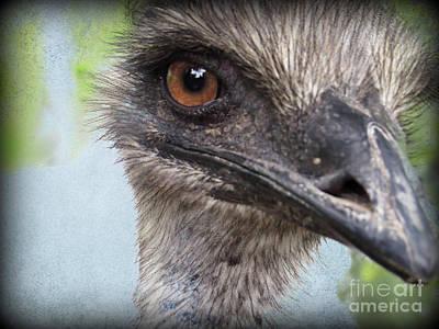 Ostrich Portrait Poster by Ella Kaye Dickey