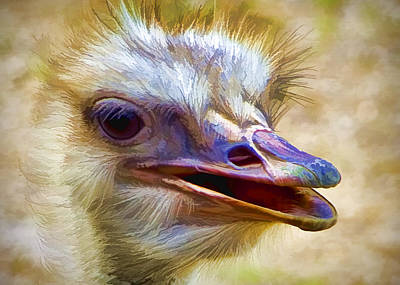 Ostrich Poster by Ron Grafe