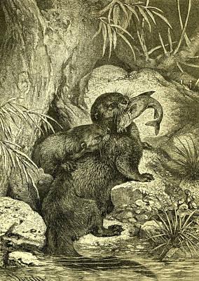 Otter 1891 Austria Poster