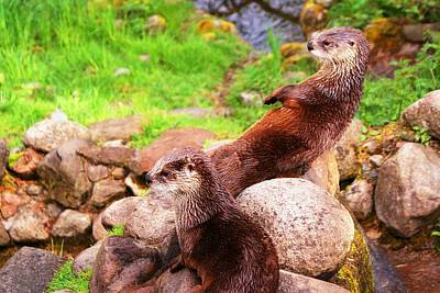 Otters Poster by JM Brannigan