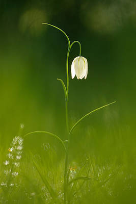 Out Of The Green Poster by Roeselien Raimond
