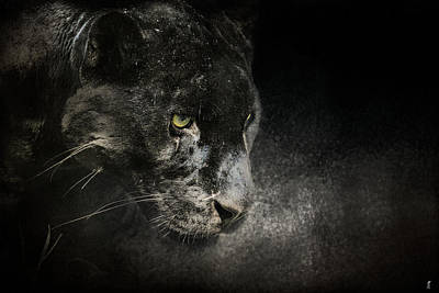 Out Of The Shadows - Wildlife - Black Leopard Poster by Jai Johnson