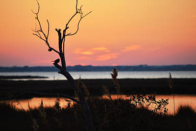 Poster featuring the photograph Ocean City Sunset Out On A Limb by Bill Swartwout