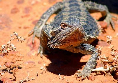 Poster featuring the photograph Outback Lizard 2 by Henry Kowalski
