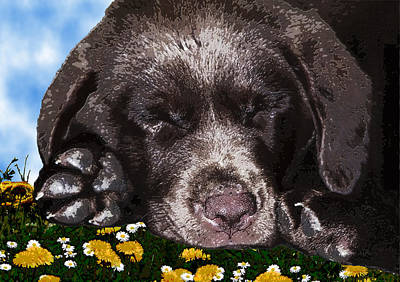 Outside Portrait Of A Chocolate Lab Puppy  Poster by Chris Goulette