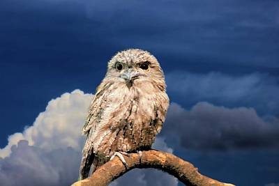 Owl At Dusk Poster