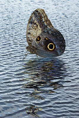 Owl Butterfly On Water Poster