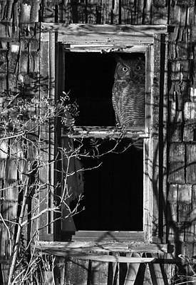 Owl In The Window Poster by Angie Vogel