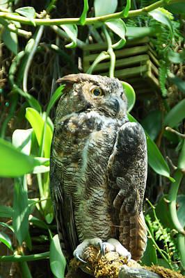 Owl Portrait 2 Poster