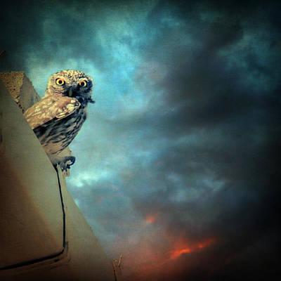 Owl Poster by Taylan Apukovska