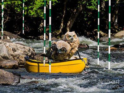 Owlets In A Canoe Poster by Les Palenik