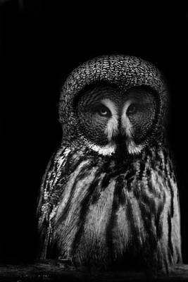 Owls Eyes Poster by Martin Newman