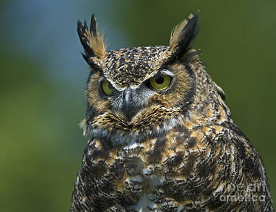 Owlsome Bird.. Poster