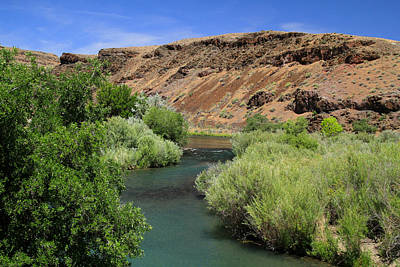 Owyhee River Great Brown Trout Poster by Ed  Riche