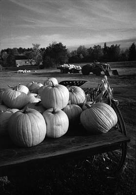 Oxford Pumpkins Bw Poster