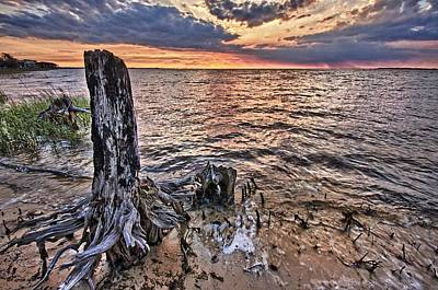 Oyster Bay Stump Sunset Poster by Michael Thomas