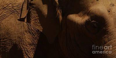 Pachyderm Panorama Poster