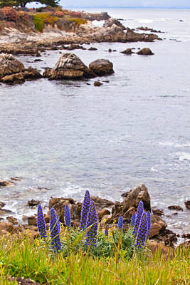 Pacific Grove Coastline Poster by Melinda Ledsome