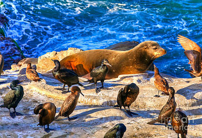 Poster featuring the photograph Pacific Harbor Seal by Jim Carrell