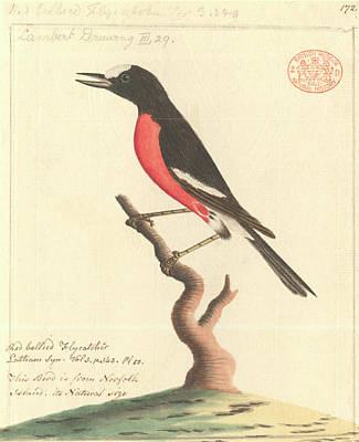 Pacific Robin Poster by Natural History Museum, London