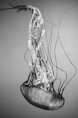 Poster featuring the photograph Pacific Sea Nettle - Black And White by Marianna Mills