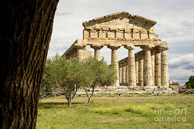 Paestum Temple Poster by Prints of Italy