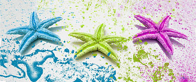 Paint Spattered Star Fish Poster