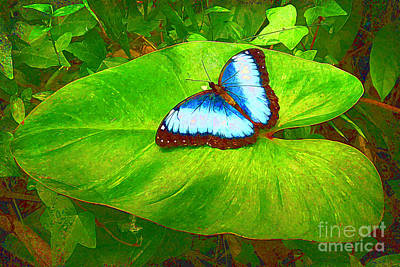 Painted Blue Morpho Poster